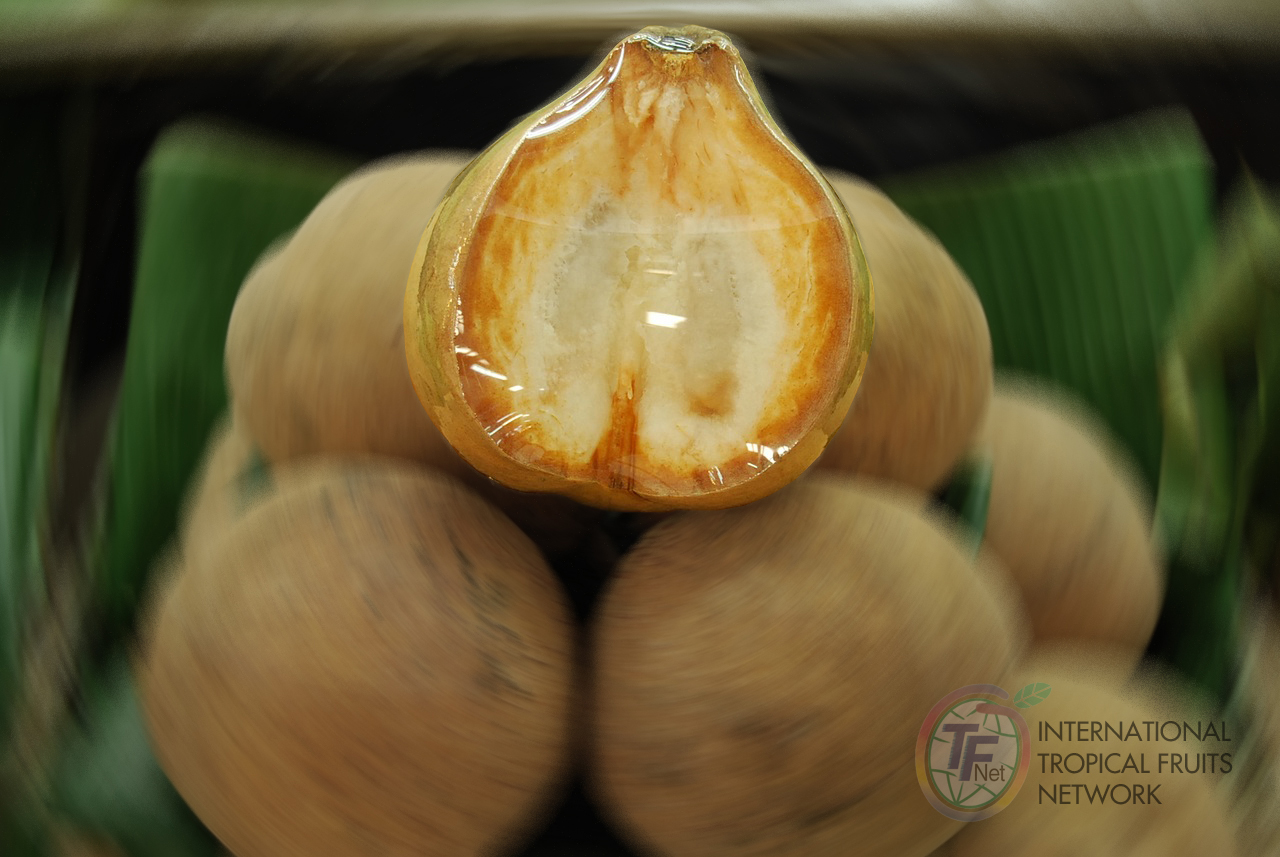 philippine fruits export study Philippines fresh fruit suppliers directory provides list of fresh fruit suppliers and fresh fruit exporters in philippines.