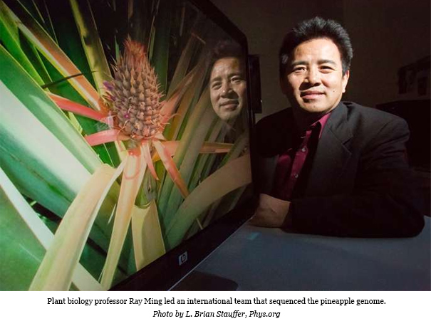 USA: Pineapple genome offers insight into photosynthesis in drought