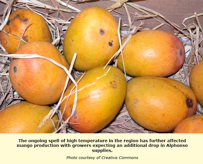 INDIA: Hot spell puts Alphonso mangoes at sunburn risk | TFNet